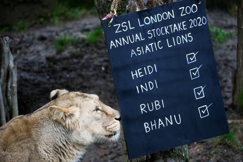 Shut by coronavirus, London Zoo seeks donations to safeguard animals