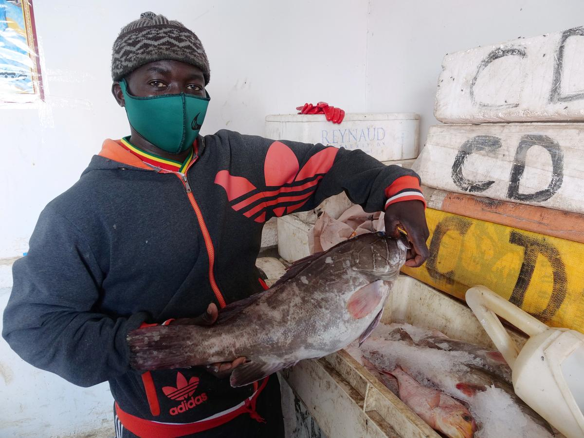 Giant 'noble' thiof gives Senegalese fish-lovers crumbs of comfort