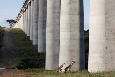 Wild animals unable to roam as city encroaches on Nairobi park