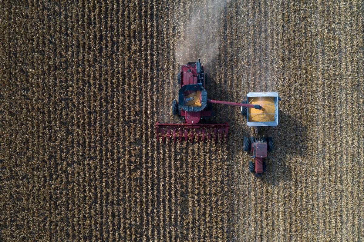 Column: Crop Watch - Yield potential hangs on despite widespread rain needs