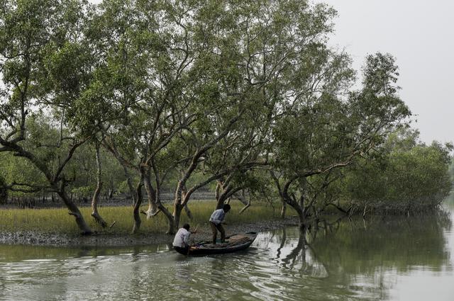 Men on a boat row past mangrove trees encircling the island of Satjelia in the Sundarbans, India, December 15, 2019. REUTERS/Anushree Fadnavis