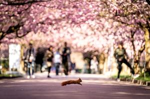 Spring in blossom around the world