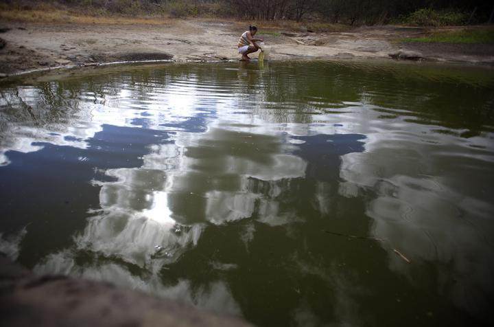 アングル:乾燥化進むブラジル、「貯水の森」再生目指す女性たち