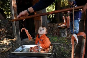 Amid historic drought, California's Hoopa Valley Tribe try to save salmon and a way of life